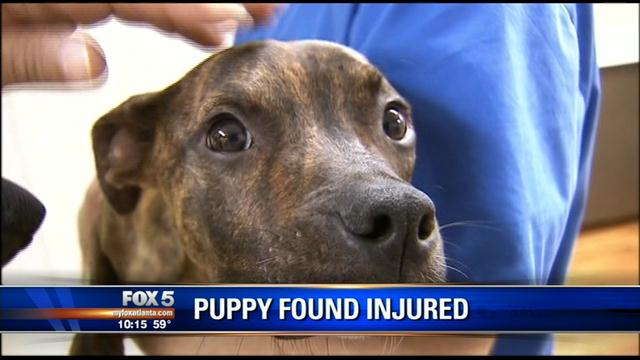 Rescue group saves abused animal