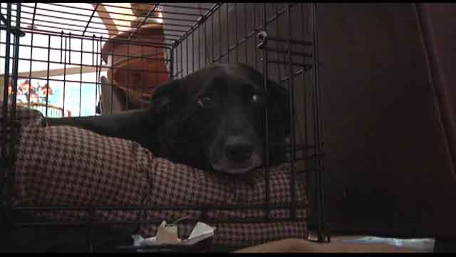 Canine flu rising fast in Metro Atlanta