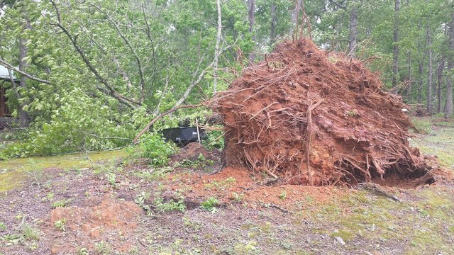 Strong winds topple trees in northwest Georgia