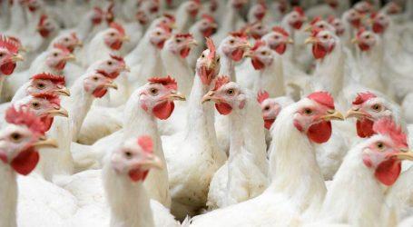 The Price-Fixing Scandal Rocking Big Chicken