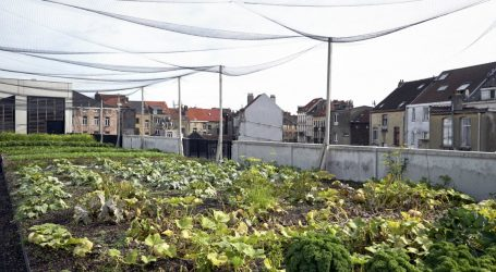 Why Growing Veggies in the City Isn't Just a Feel-Good Exercise