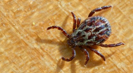 Climate Change Pushes Ticks Into Canada, Bringing Lyme Disease (and Confusion) With Them