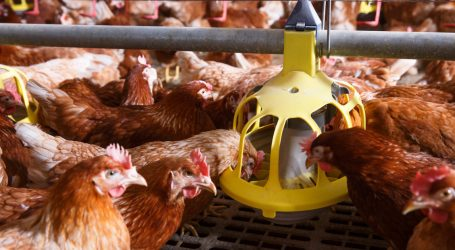 """Your Organic """"Cage-Free"""" Eggs Might Come From Hens Locked Up All Day"""