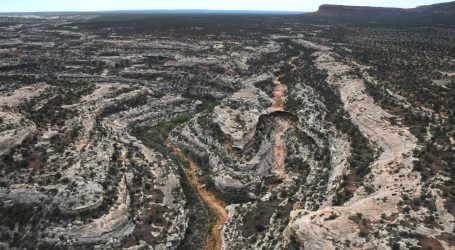 This Paleontologist Discovered a Fossil 'Find Of A Lifetime' in the Area Trump Cut From Bears Ears