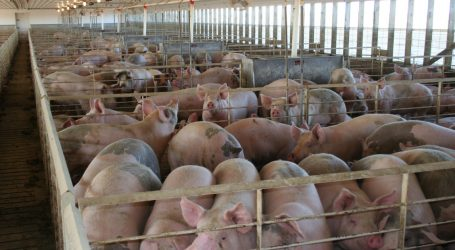 A Federal Jury Just Fined the Pork Industry $50 Million for Being Bad Neighbors