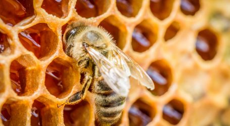 Ignore the Buzz About Honey Curing Allergies