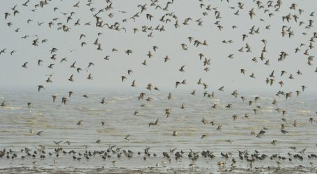 Even Nixon Supported This 100-Year-Old Law Protecting Migratory Birds. Now Trump Wants to Gut It.