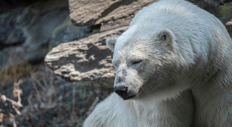 Let's Face It: We've Overexploited Photos of Cute Polar Bears