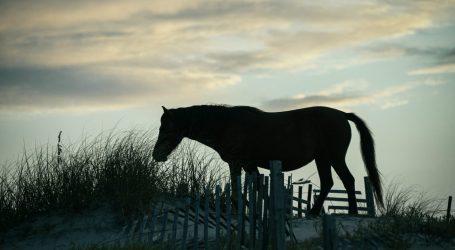 Why North Carolina Won't Evacuate Its Beloved Wild Horses During the Hurricane