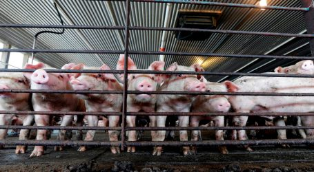 Even Before Florence's Floods, North Carolina's Factory Farms Were Deadly to Their Neighbors