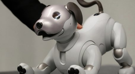 Robot Puppies Will Soon Be Man's Best Friend