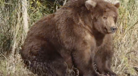 The Internet Is in Love With These Adorable Fat Bears