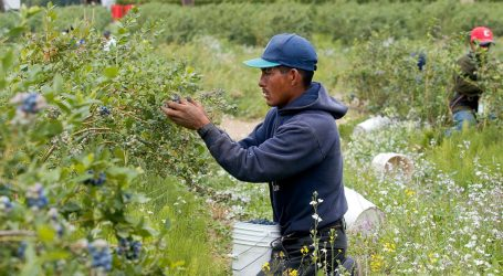 New Department of Labor Numbers Show Farmers Are Increasingly Turning to this Controversial Visa Program