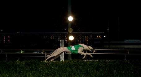 Election Day Could Mean the End of Greyhound Racing in the Sport's Biggest State