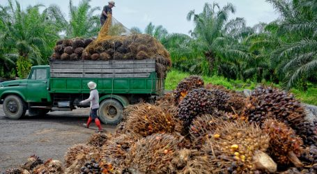 We Need to Talk About Palm Oil