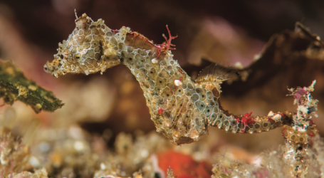 Exploding Ants, Rainbow Slugs, and Tiny Seahorses: 11 New Species Discovered This Year