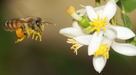 Puerto Rico May Hold the Answer to Saving the Bees