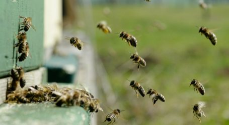 Bees Are Facing Yet Another Existential Threat