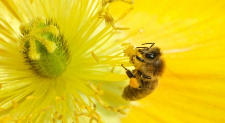 There's So Much Plastic in the Environment That Bees Are Making Nests Out of It