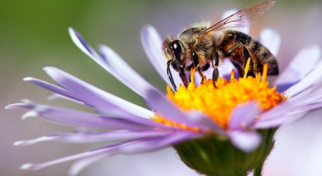 Trump Stings Honeybees While They're Down
