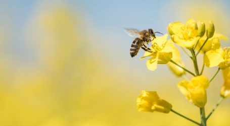 A New Study Reveals Just How Toxic a Bee's World Has Become