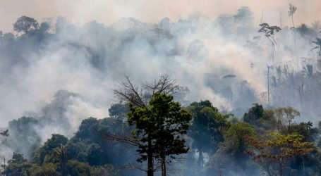"""""""The Amazon Stays, Bolsonaro Goes"""": Protesters in Brazil Demand Action on Rainforest Fires"""