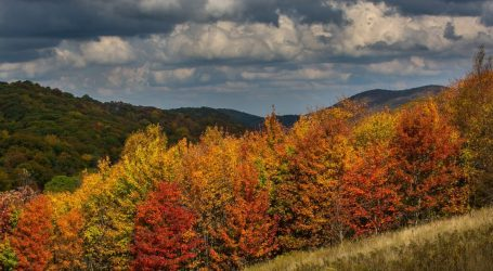 How to See Fall Colors Without a Car