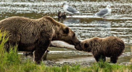 "New ""Amazingly Cruel"" Trump Public Land Rules Will Let Alaska Hunters Kill Bear Cubs in Dens"