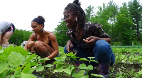 White People Own 98 Percent of Rural Land. Young Black Farmers Want to Reclaim Their Share.