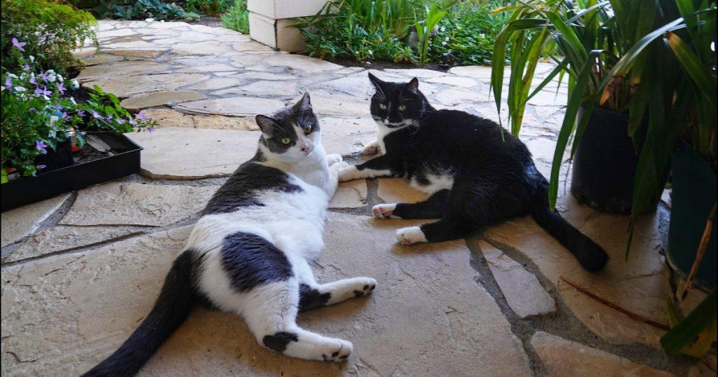 friday-cat-blogging-–-3-july-2020