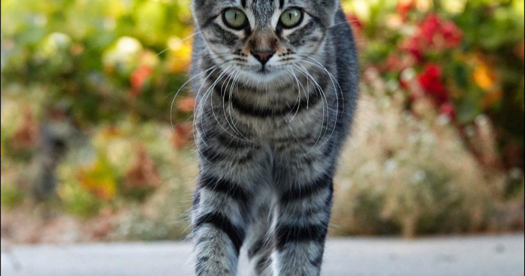 friday-cat-blogging-–-31-july-2020