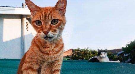 Friday Cat Blogging – 11 September 2020