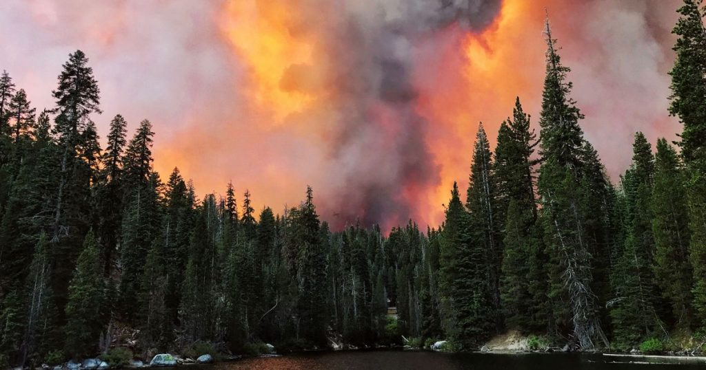 2-years-ago,-scientists-warned-us-dead-trees-would-fuel-unpredictable-wildfires-now-it's-happening.