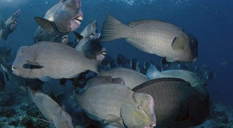 Fish Species Communicate With One Another in Coral Reefs. Can They Save These Threatened Ecosystems?