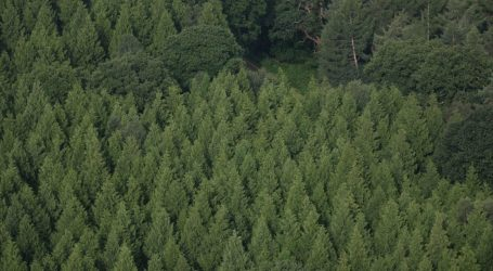 Do Forests Grow Better With Our Help or Without?
