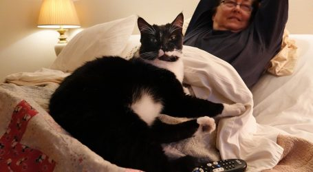 Friday Cat Blogging – 25 December 2020