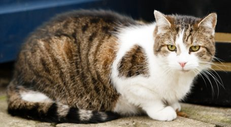 Two Tricks That Could Tame Your Cat's Taste for Furry, Feathery Critters