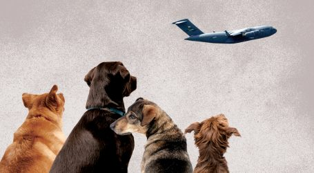 Inside the Wild, Twitter-Fueled Race to Airlift Dogs From Afghanistan